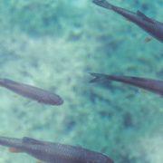 Fischzucht 4.0